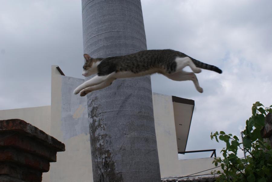 don gato 717: