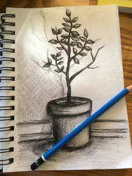 A simple plant by CocoPanda21