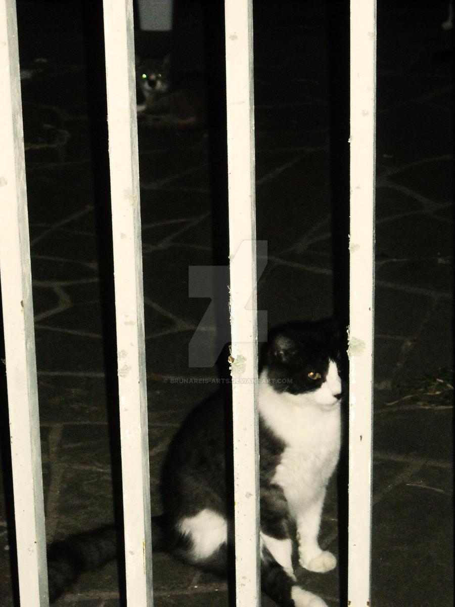 Cat Inside by brunareis-arts