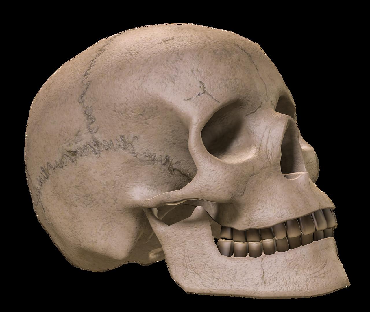 PNG Skulls favourites by MagicAngel8773 on DeviantArt