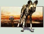 African Wild Dog Contest