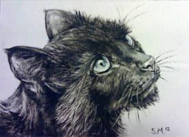 Krista's Kitty - ACEO