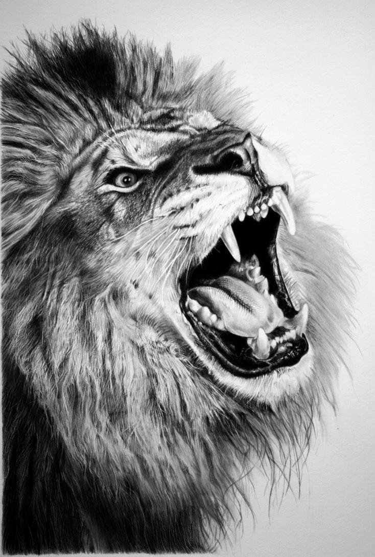 pencil lion by francoclun