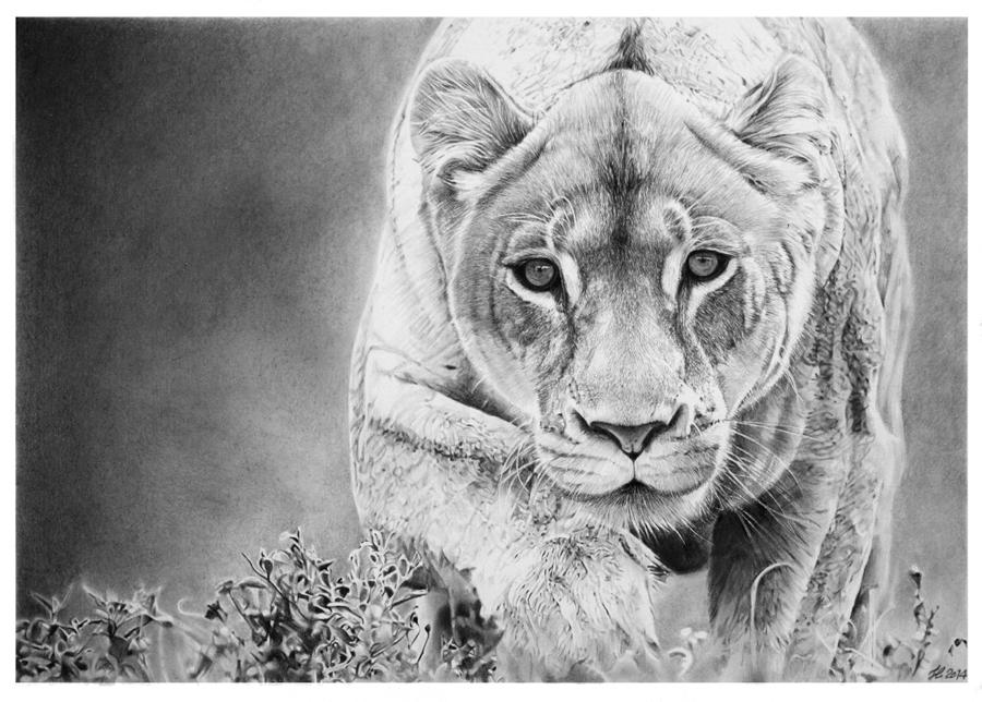 dibujos - Franco Clun....................dibujos hiperrealistas...............Un espectaculo¡¡¡ Lioness_by_francoclun-d73xd19