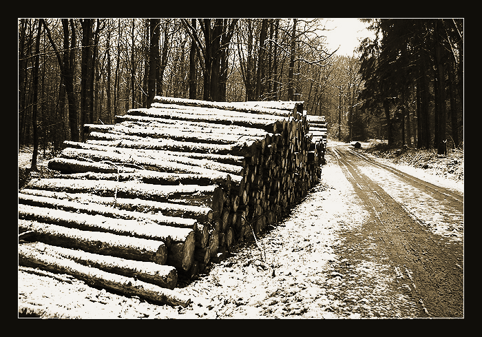 Snow by vanHardenbrook