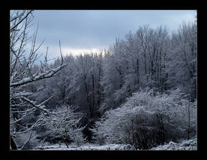Winter forest IV