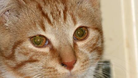 Garfield - Starry Eyes