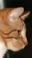 Garfield - Distant Look