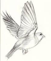 Bird 6 by Kringelkatze