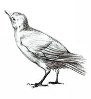 Bird 2 by Kringelkatze