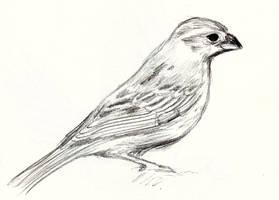 Bird 3 by Kringelkatze
