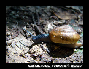 Snail on trail