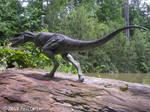 Albertosaurus II