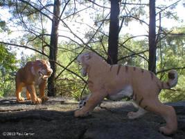 Smilodon Populator VS Smilodon fatalis by Carnosaur