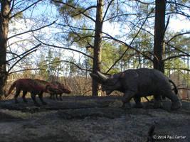 Andrewsarchus VS Arsinoitherium by Carnosaur