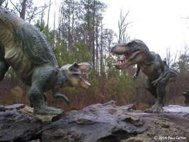 Tyrannosaur Showdown