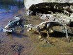 Kaprosuchus VS Crocodile