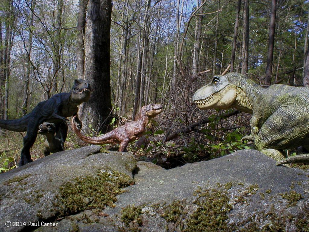 Carnosaur 39 s dinosaur art page 5 dinosaur toy forum for T rex family