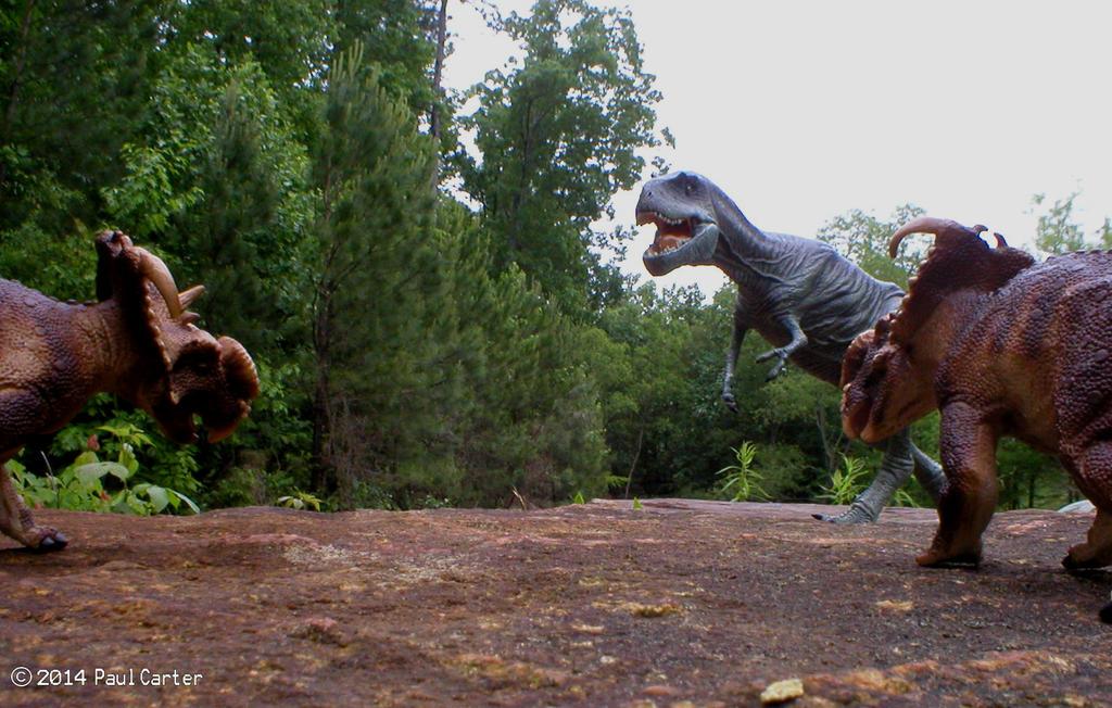 Albertosaurus VS  Pachyrhinosaurus Vs Albertosaurus