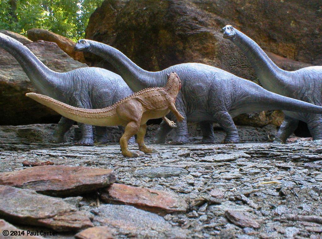 Ceratosaurus VS Apatosaurus. by Carnosaur on DeviantArt