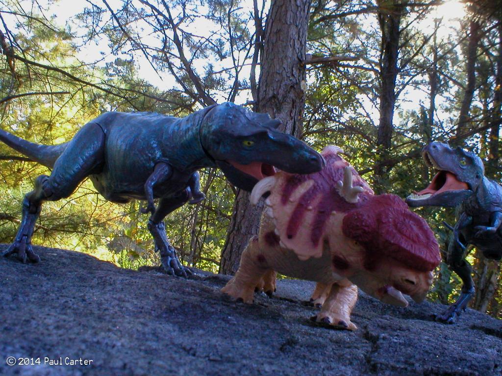 pachyrhinosaurus vs carnotaurus - photo #32