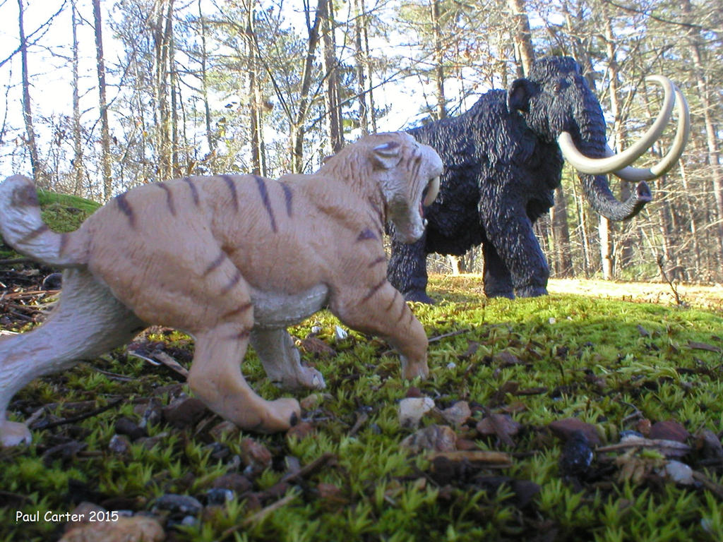 Smilodon Face By Pyroraptor42 On Deviantart: Smilodon Vs Wooly Mammoth. By Carnosaur On DeviantArt