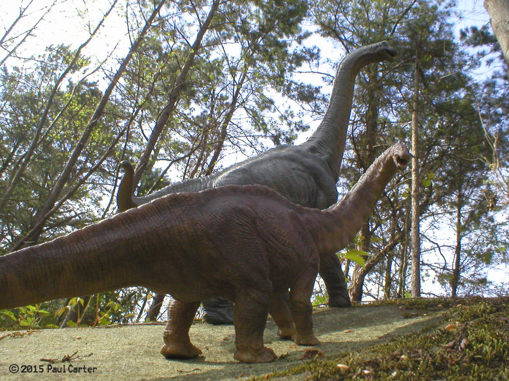 Apatosaurus And Brachiosaurus By Carnosaur On DeviantArt