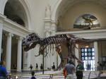 Sue The Tyrannosaurus