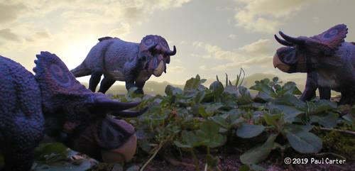Nasutoceratops. by Carnosaur