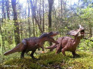 Gorgosaurus Vs Styracosaurus.