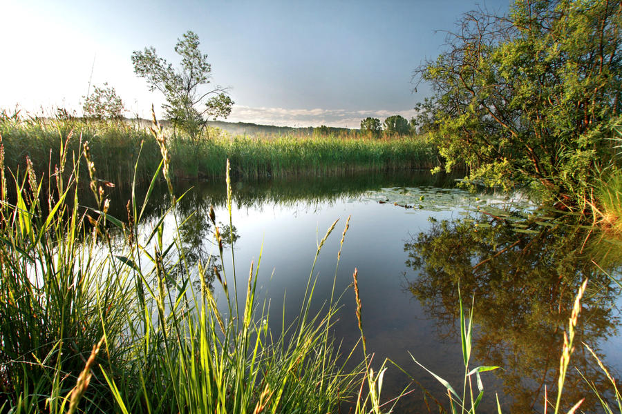 Fishing pond by neijala on deviantart for Buy pond fish