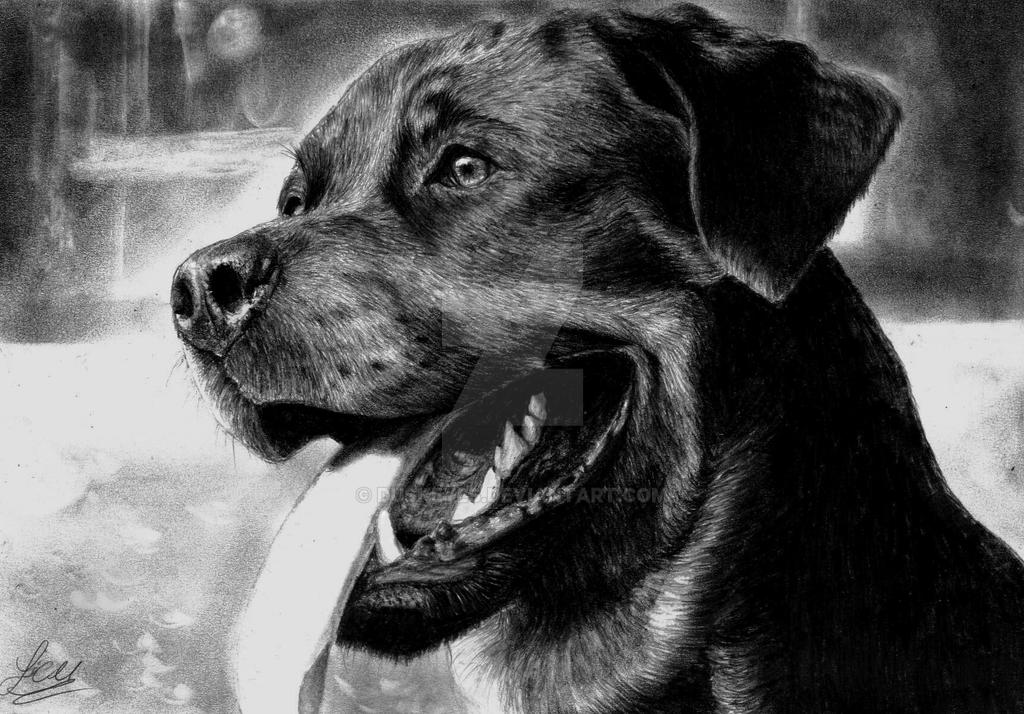 Rottweiler by DuskEyes