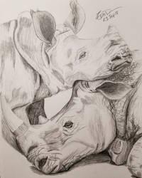 Rhino Cuddles