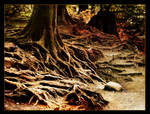 Of old trees and fairy tales
