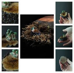 Fungi.18.11