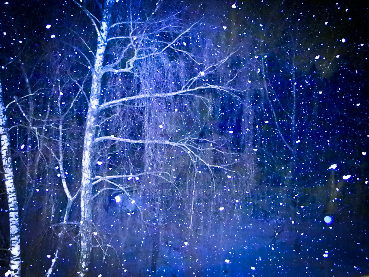 Latvian Snowfall Photography Print by KeironWest