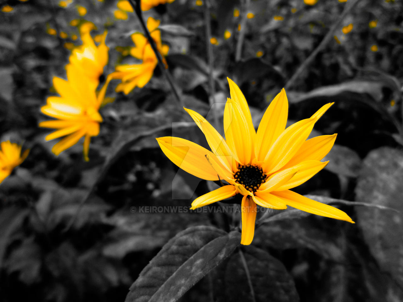 Yellow flower photography siewalls yellow flower photography print by keironwest on deviantart mightylinksfo