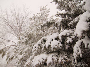 Winter of 07-08 - 1