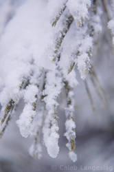 Winter of 07-08 - 2