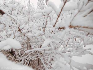 Winter of 07-08 - 3