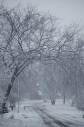 Winter of 07-08 - 6
