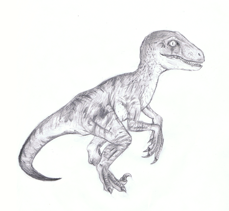 Velociraptor By Hydro-King On DeviantArt