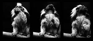 Calgary Zoo 01