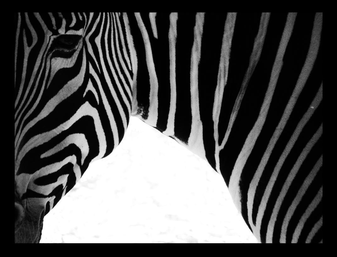 calgary zoo05 by JBVendamme