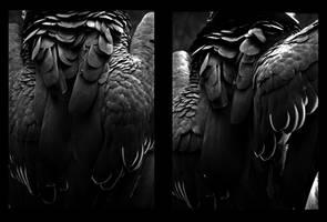 calgary zoo06 by JBVendamme