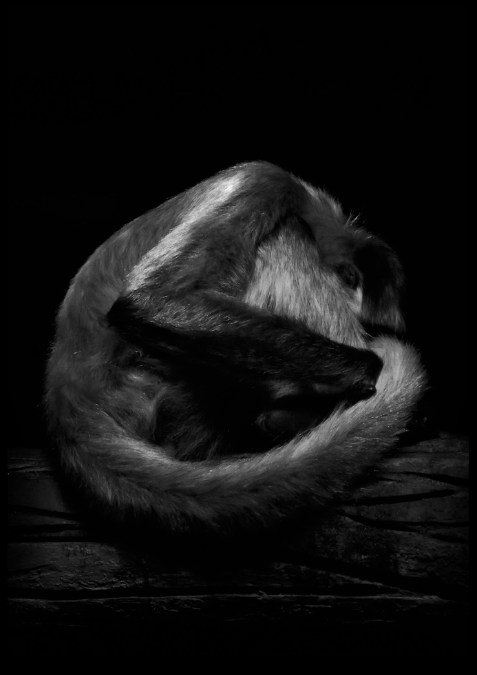 calgary zoo07 by JBVendamme