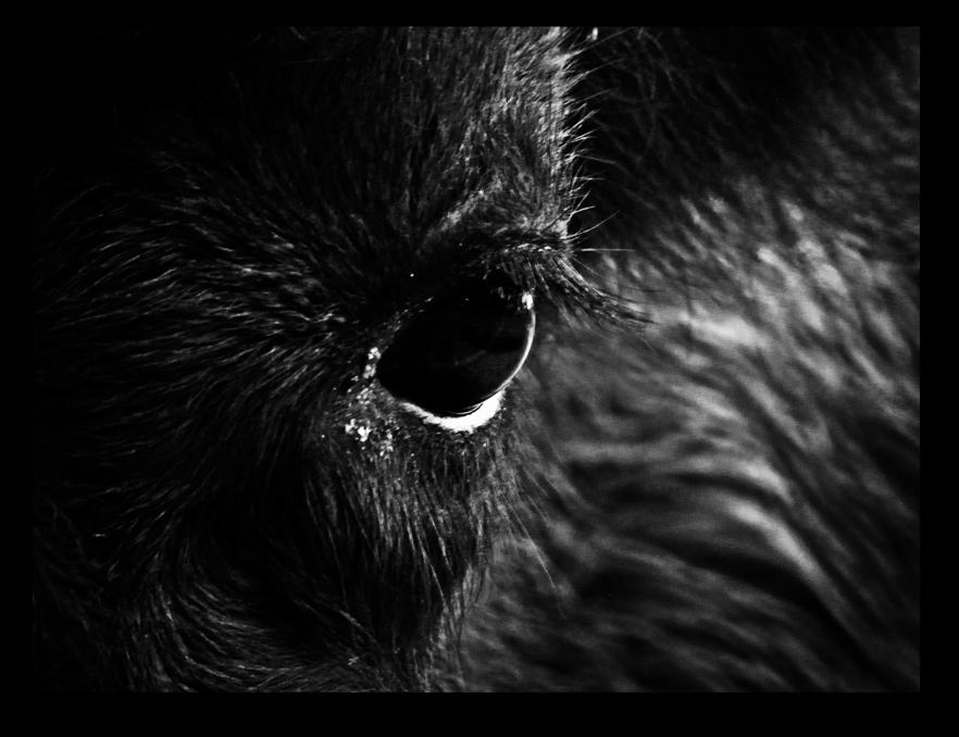 calgary zoo10 by JBVendamme
