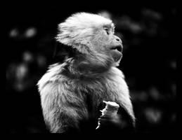 calgary zoo11 by JBVendamme