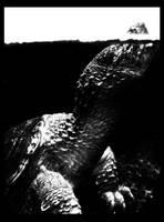 ALIGATOR TURTLE by JBVendamme
