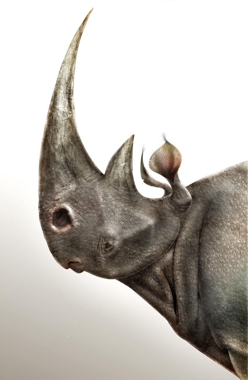 Rhino by thedoberman